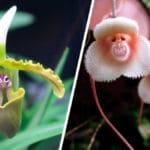 Todo sobre las Orquídeas y sus Cuidados - Cultivando Flores
