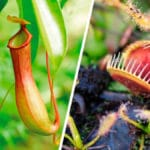 Todo sobre las Plantas Carnívoras y sus Cuidados - Flores