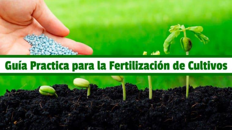 Guía Practica para la Fertilización de Cultivos PDF - Cultivando Flores