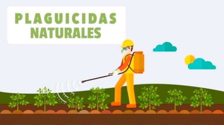 Guía para Preparar Plaguicidas Naturales PDF - Cultivando Flores