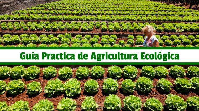 Guía Practica de Agricultura Ecológica PDF - Cultivando Flores
