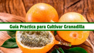 Guía Practica para Cultivar Granadilla PDF - Cultivando Flores