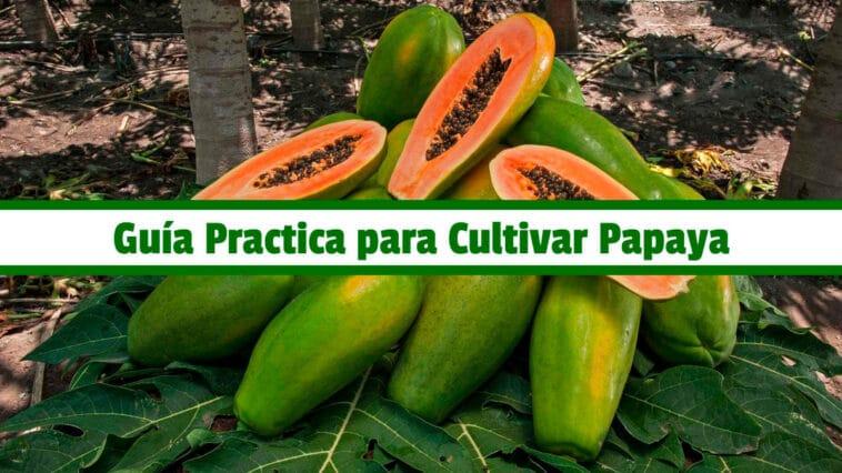 Guía Practica para Cultivar Papaya PDF - Cultivando Flores