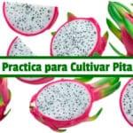 Guía Practica para Cultivar Pitahaya PDF - Cultivando Flores