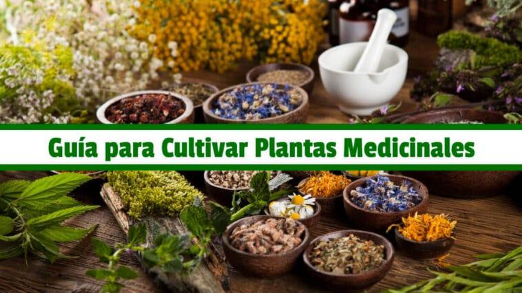 Guía Practica para Cultivar Plantas Medicinales PDF - Cultivando Flores