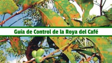 Guía de Control de la Roya del Café PDF - Cultivando Flores