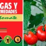 Guía de Plagas y Enfermedades del Tomate PDF - Cultivando Flores