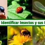 Guía para Identificar Insectos y sus Beneficios PDF - Cultivando Flores