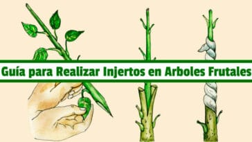 Guía para Realizar Injertos en Arboles Frutales PDF - Cultivando Flores