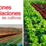 Guía para Realizar Rotación de Cultivos PDF - Cultivando Flores