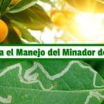 Guía para el Manejo del Minador de Cítricos PDF - Cultivando Flores
