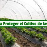Libro para Proteger el Cultivo de las Heladas PDF - Cultivando Flores