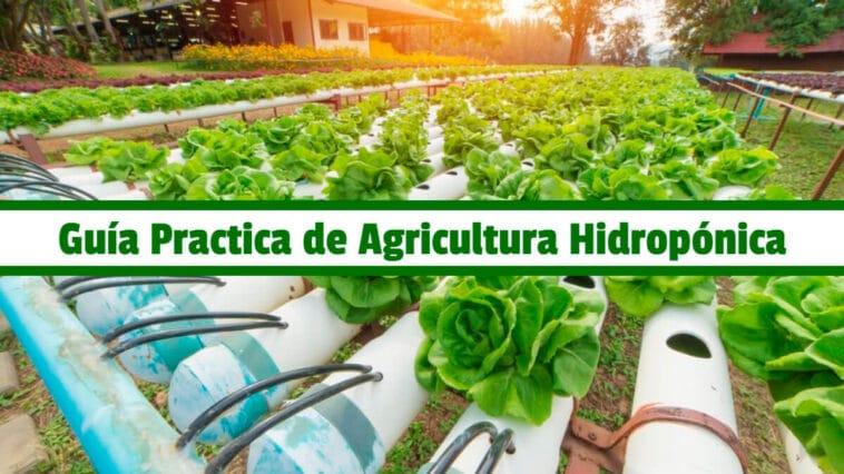 Guía Practica de Agricultura Hidropónica PDF - Cultivando Flores