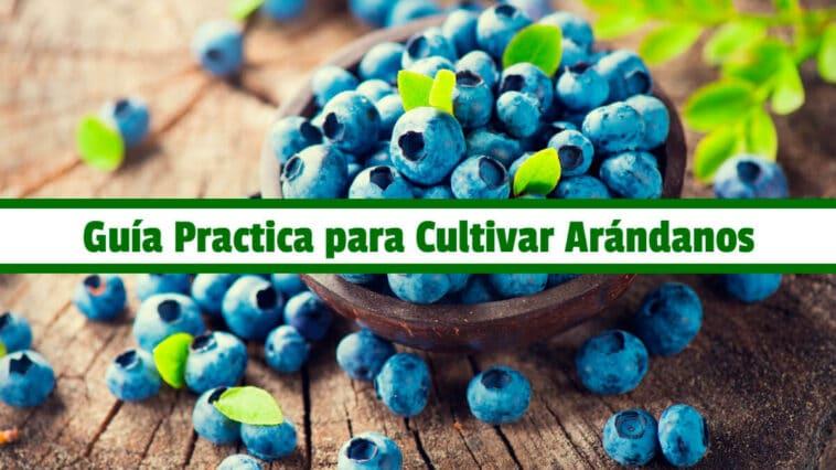 Guía Practica para Cultivar Arándanos PDF - Cultivando Flores