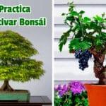 Guía Practica para Cultivar Bonsái PDF - Cultivando Flores