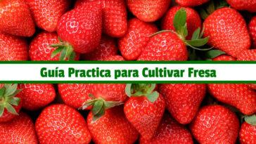 Guía Practica para Cultivar Fresa PDF - Cultivando Flores