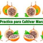 Guía Practica para Cultivar Maracuya PDF - Cultivando Flores
