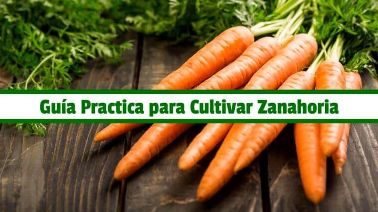 Guía Practica para Cultivar Zanahoria PDF - Cultivando Flores