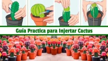 Guía Practica para Injertar Cactus PDF - Cultivando Flores