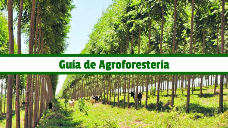 Guía de Agroforestería PDF - Cultivando Flores