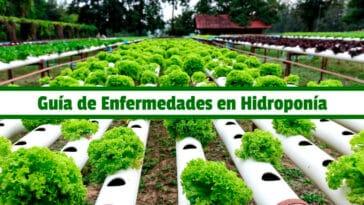 Guía de Control de Enfermedades en Hidroponía PDF - Cultivando Flores