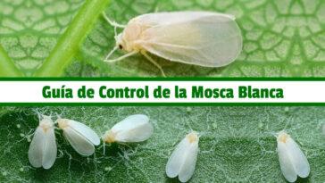 Guía de Control de la Mosca Blanca PDF - Cultivando Flores