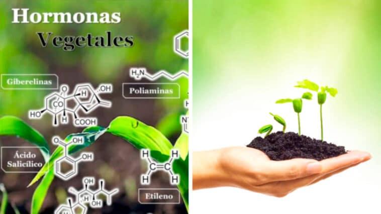 Guía de Estudio de Hormonas Vegetales PDF - Cultivando Flores