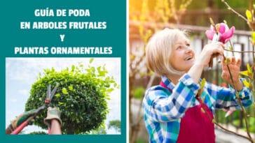 Guía de Poda en Arboles Frutales y Plantas Ornamentales PDF - Cultivando Flores