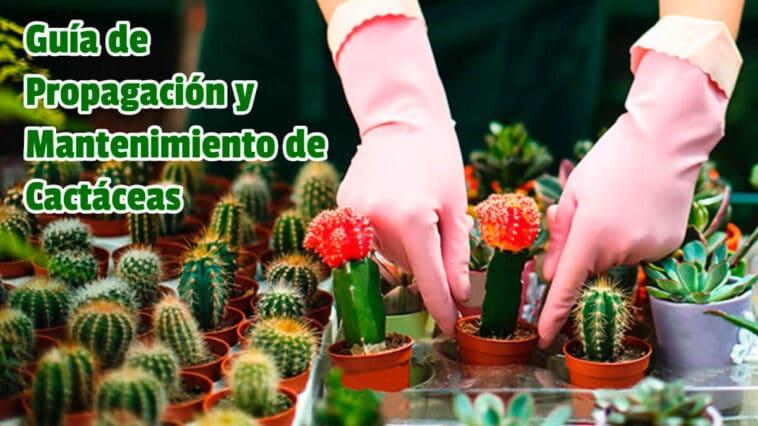 Guía de Propagación y Mantenimiento de Cactaceas PDF - Cultivando Flores