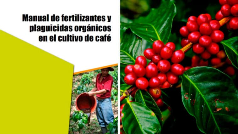 Guía para Preparar Fertilizantes y Plaguicidas para el Cultivo de Café PDF - Cultivando Flores